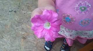864 X 480  65.3 Kb 1088 X 1824 250.4 Kb Цветы для вашего сада, кафе, придомовой территории. КУПИМ многолетники
