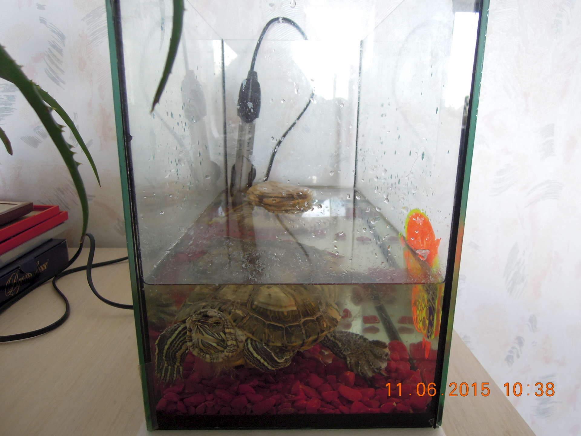 Аквариумы для красноухих черепах своими руками 62