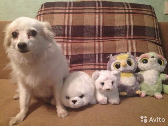 база купить собаку на авито в москве породы ремонт квартире