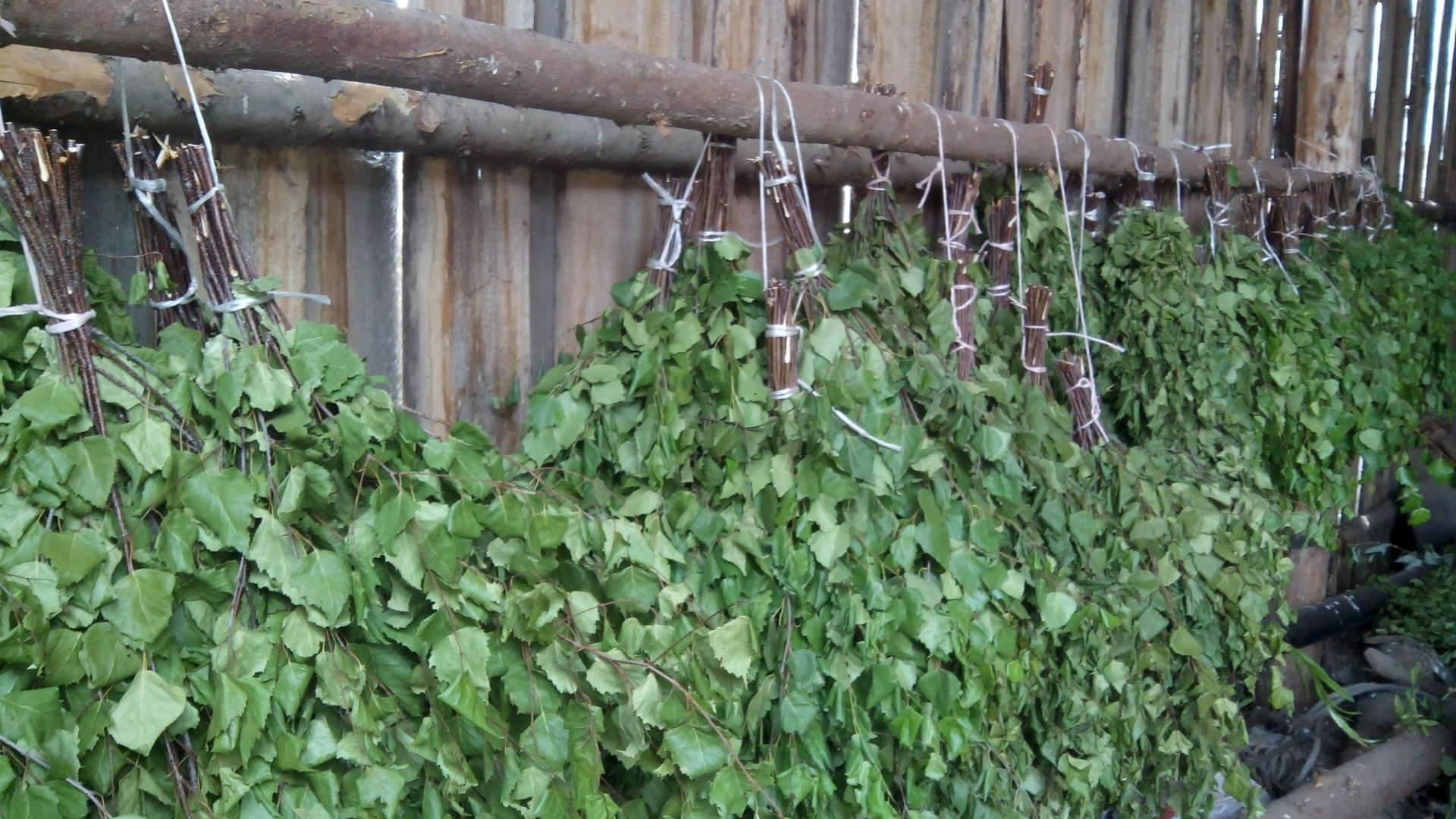 Веник из крапивы для бани - заготовка, сушка, применение! 67