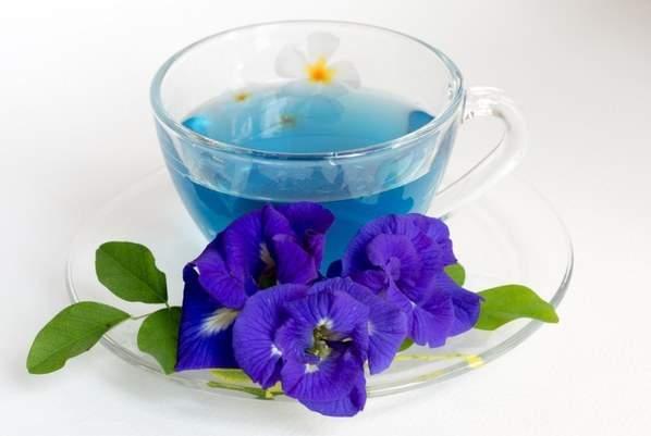 чем полезен синий чай из тайланда