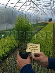 359 X 478 46.0 Kb 478 X 404 32.0 Kb Горшечные ЦВЕТЫ, Цветы для сада*Луковичные-ПОЛУЧАЕМ СРОЧНО