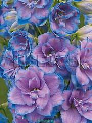 359 X 478 48.7 Kb 478 X 359 46.7 Kb 359 X 478 62.3 Kb 478 X 359 65.7 Kb Горшечные ЦВЕТЫ, Цветы для сада*Предзаказ ВЕСНА 2016-СБОР
