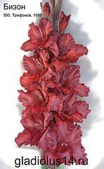 295 X 478 36.5 Kb Горшечные ЦВЕТЫ, Цветы для сада*Предзаказ ВЕСНА 2016-ОПЛАТА, ОКС -в ЦРП