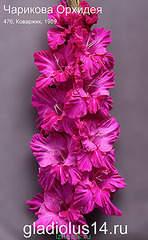 295 X 478 41.8 Kb 295 X 478 36.5 Kb Горшечные ЦВЕТЫ, Цветы для сада*Предзаказ ВЕСНА 2016-ОПЛАТА, ОКС -в ЦРП