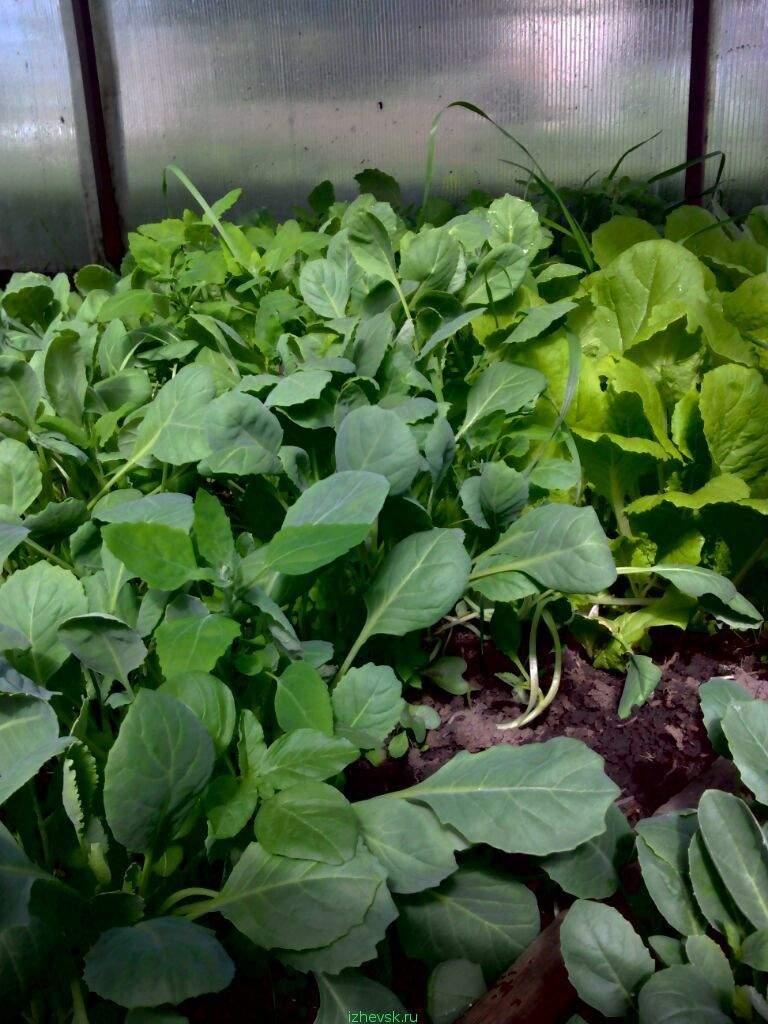Бизнес на рассаде овощей и цветов 382