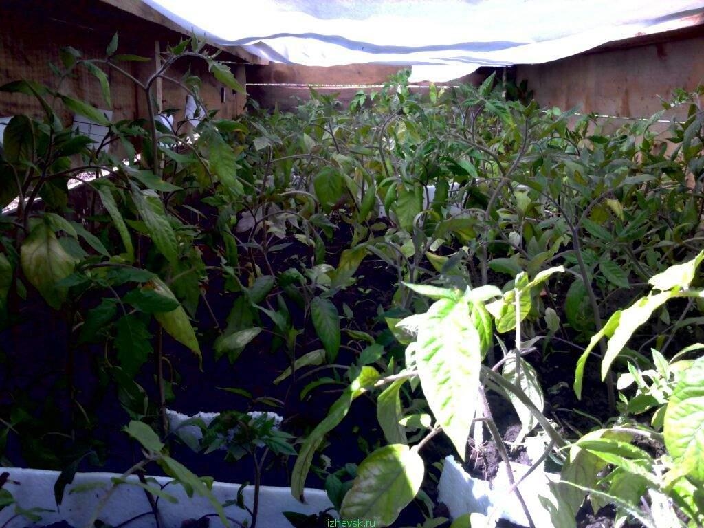 Бизнес на рассаде овощей и цветов 777
