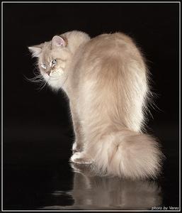 Котенок лижет экран мобилы