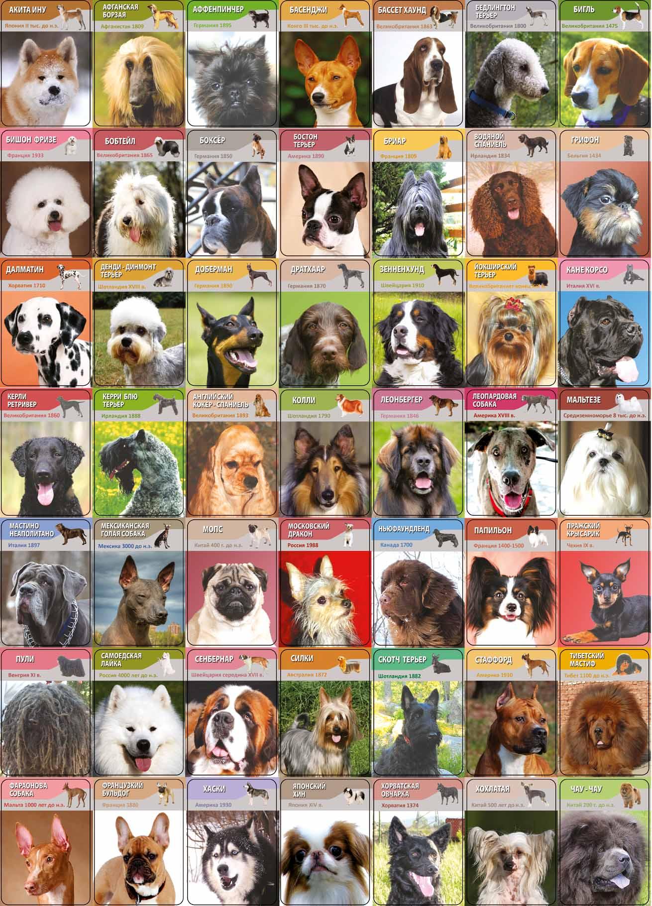 Картинки породы собак с названиями на русском