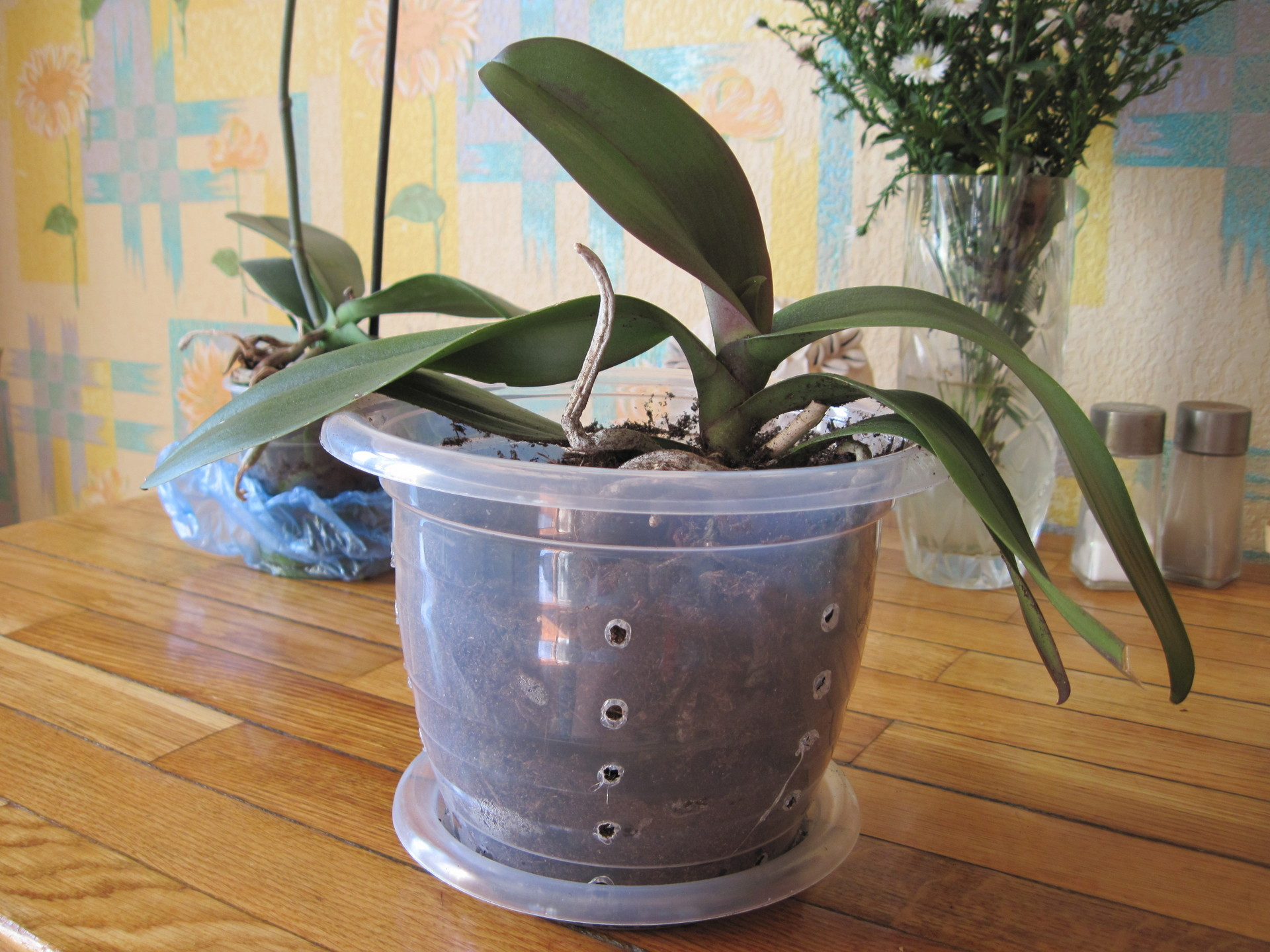 организациях какие горшки нужны для орхидей фото полный