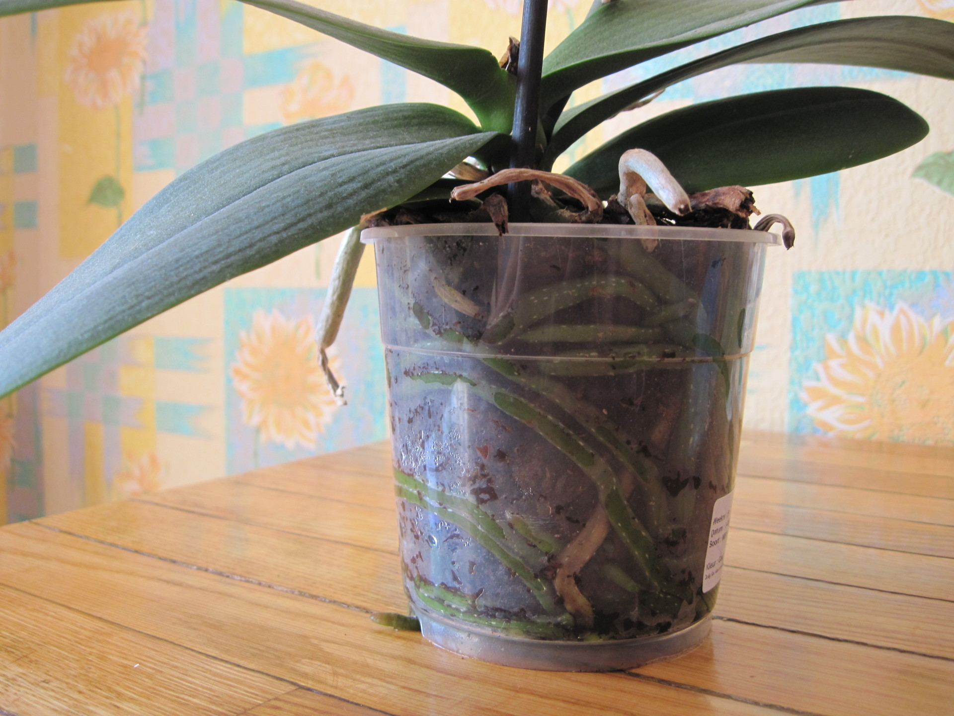 Рисунок на ногти фото орхидея разберемся