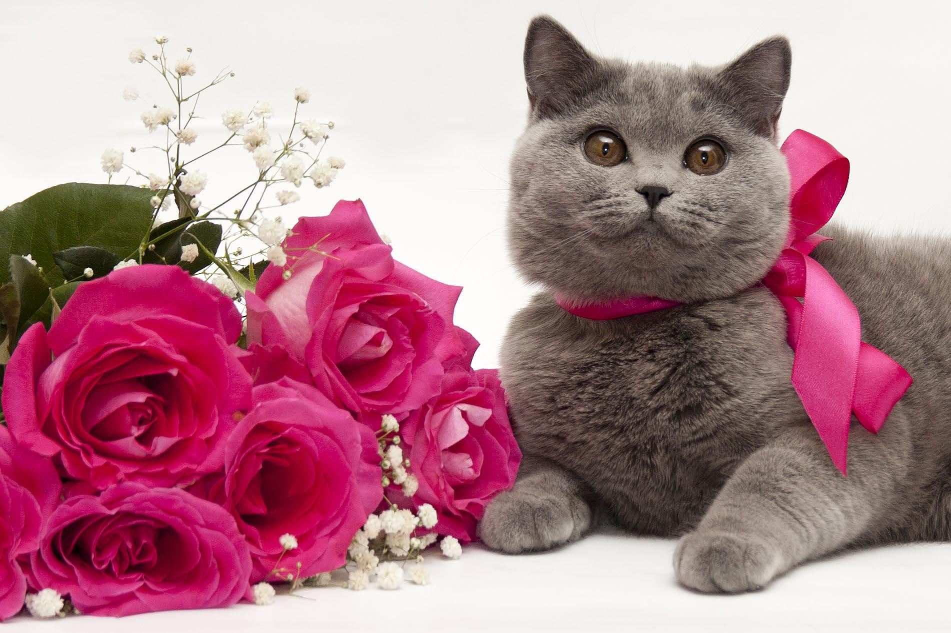 конце картинки котята с цветами роз кухни стиле