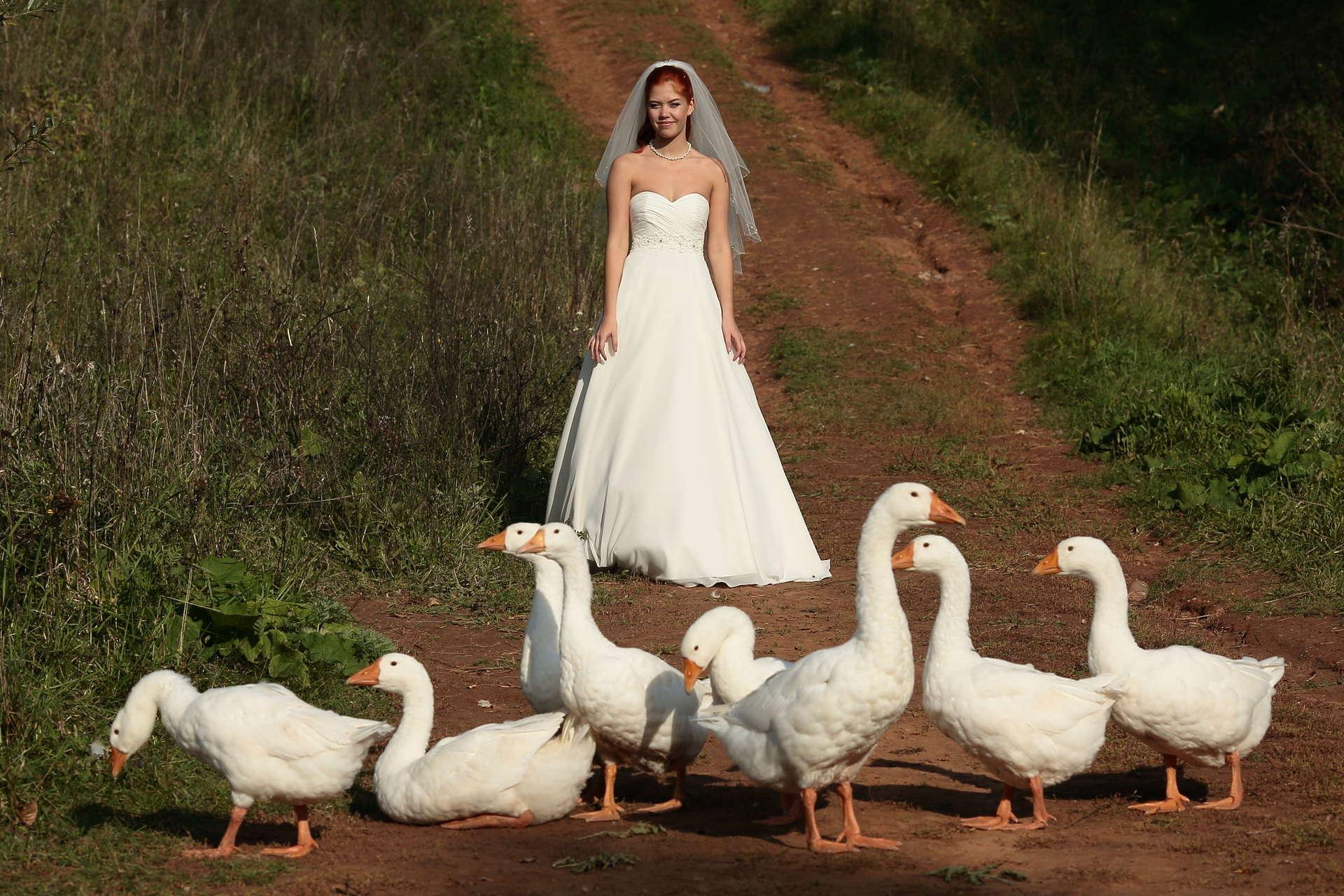 последние годы картинки свадебные гуси колонка ожидаемый