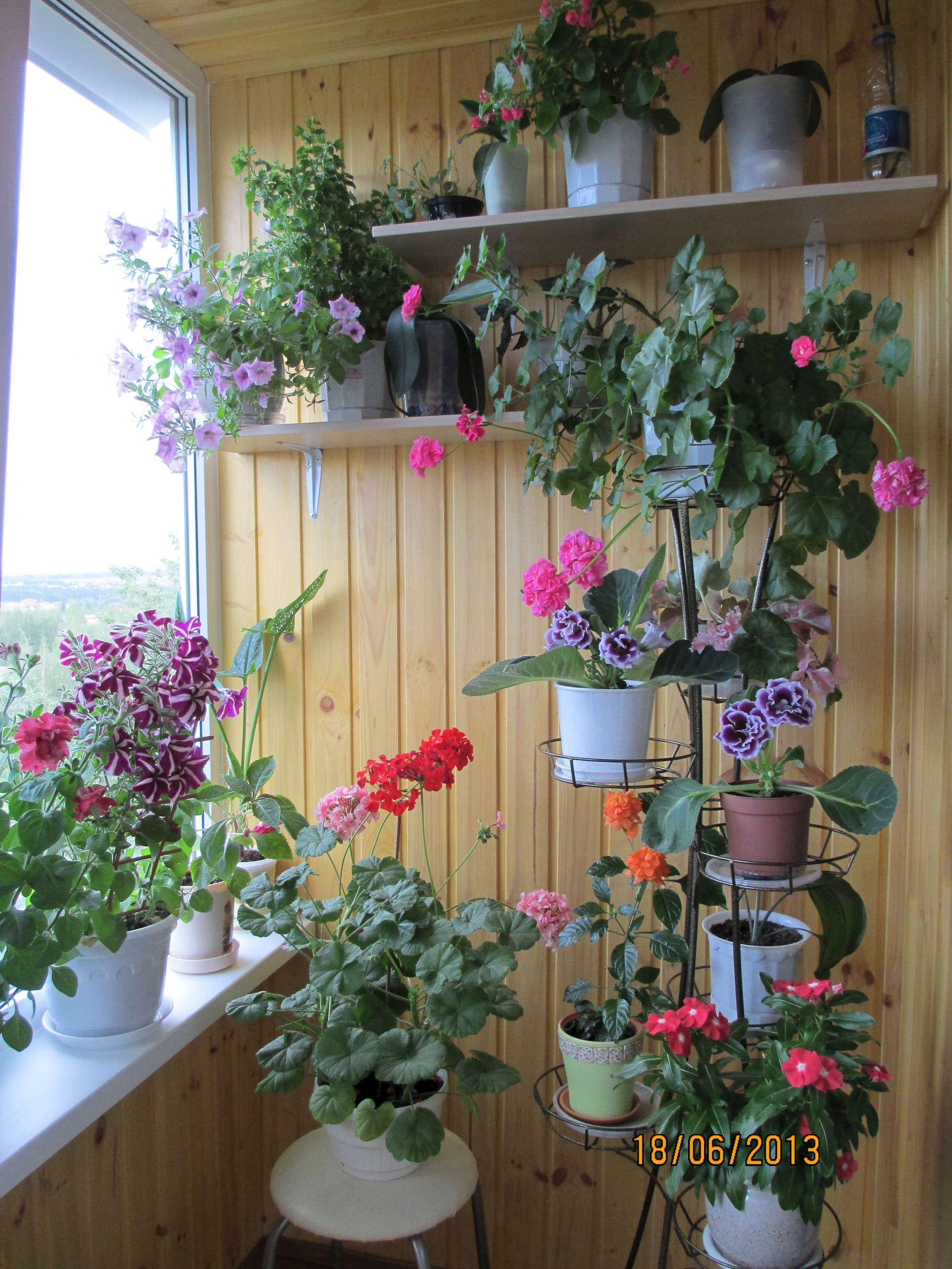 Тоня : оранжерея на лоджии : цветы.