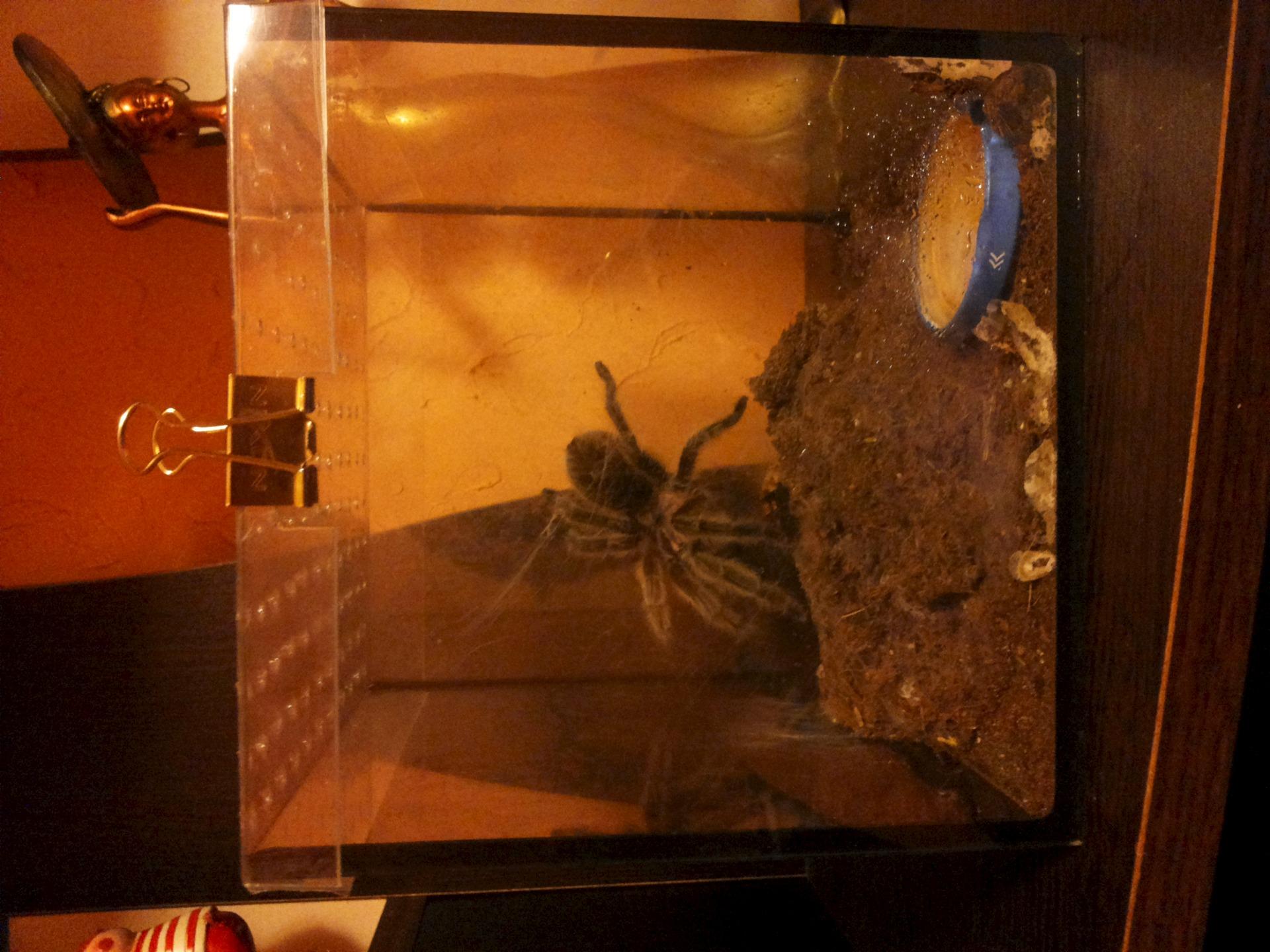 пауки в террариуме картинки всего