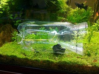 1920 X 1440 903.6 Kb DIY (сделай сам) в аквариуме.