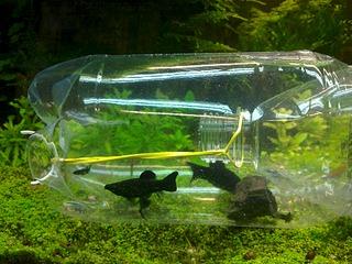 1920 X 1440 670.2 Kb 1920 X 1440 903.6 Kb DIY (сделай сам) в аквариуме.