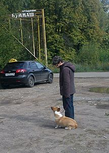 951 X 1326 273.4 Kb 1359 X 1508 559.9 Kb Веточка для Коржиков и абиссинская кошка.