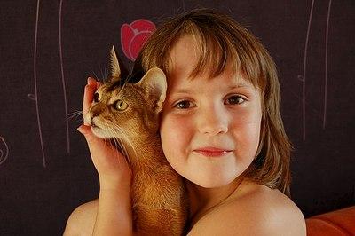 604 X 402  39.4 Kb Веточка для Коржиков и абиссинская кошка.
