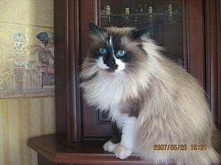 1600 X 1200 578.9 Kb Мишель, моя кошка