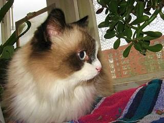 1920 X 1440 580.0 Kb Мишель, моя кошка