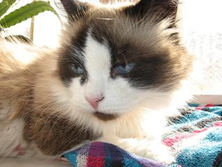 1920 X 1440 626.7 Kb Мишель, моя кошка