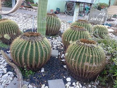 1920 X 1440 496.1 Kb 1920 X 1440 371.0 Kb Растения-экзоты в саду