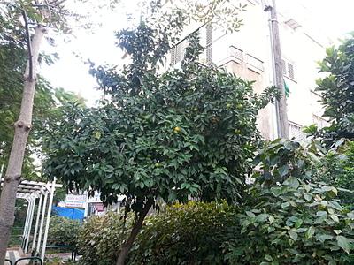 1920 X 1440 427.1 Kb 1920 X 1440 1005.8 Kb Растения-экзоты в саду