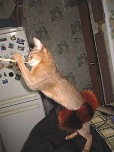 1920 X 2560 825.2 Kb 1920 X 1440 700.7 Kb Веточка для Коржиков и абиссинские кошки.