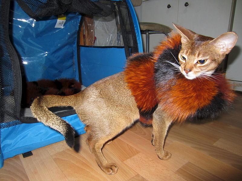 1920 X 1440 834.1 Kb Веточка для Коржиков и абиссинские кошки.