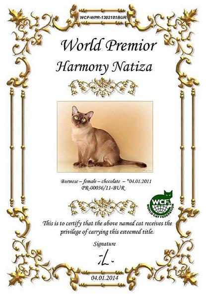 543 X 784 69.7 Kb БУРМЫ- шелковые пантеры. Питомник бурманских кошек 'NATIZE'. У нас БУРМЯТА !