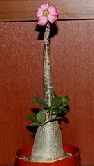 1199 X 2110 193.5 Kb Экзотические растения в квартире