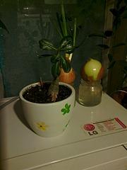1920 X 2560 707.0 Kb Экзотические растения в квартире