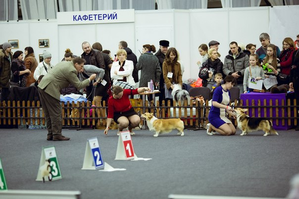 604 x 403 Веточка для Коржиков и абиссинские кошки.