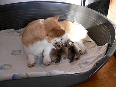 1920 X 1440 582.5 Kb Веточка для Коржиков. У нас родились абиссинские котята и щенки пемброка
