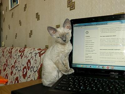 1920 X 1440 592.0 Kb Девон рекс - эльфы в мире кошек