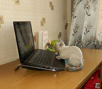 1869 X 1632 783.0 Kb Девон рекс - эльфы в мире кошек