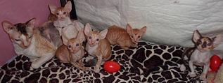 996 X 373 246.5 Kb Домашние животные (продажа, дарение, поиск хозяев)