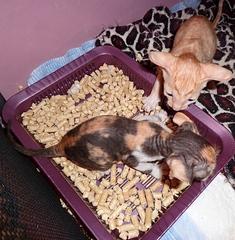 467 X 476 144.3 Kb Домашние животные (продажа, дарение, поиск хозяев)