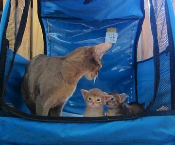 1081 X 899 202.0 Kb 1437 X 1321 392.8 Kb Веточка для Коржиков. У нас родились абиссинские котята и щенки пемброка