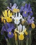 118 x 150 Тюльпаны, нарциссы, ирисы, крокусы - все весенние луковичные