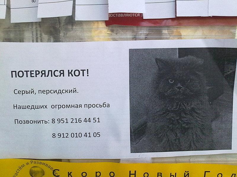 Объявление кто потерял кота