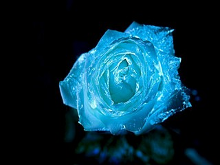 800 X 600 58.8 Kb 620 X 500 132.2 Kb 640 X 480 186.6 Kb 744 X 600 45.7 Kb живые светящиеся в темноте цветы к 8 марта