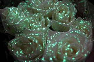 700 X 466 110.4 Kb 480 X 360 96.8 Kb живые светящиеся в темноте цветы к 8 марта