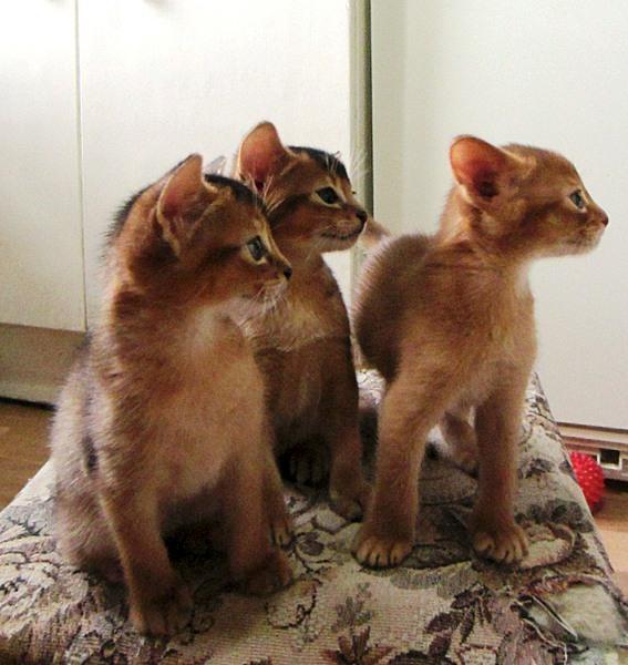 1140 X 1206 260.6 Kb Веточка для Коржиков. У нас родились абиссинские котята и щенки пемброка