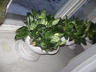 640 X 480 141.8 Kb 480 X 640 140.7 Kb 640 X 480 133.0 Kb домашние растения как ухаживать?