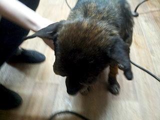1920 X 1440 516.2 Kb Боря, 17 лет - сбитая собака, Авангардная, скорее всего не будет видеть