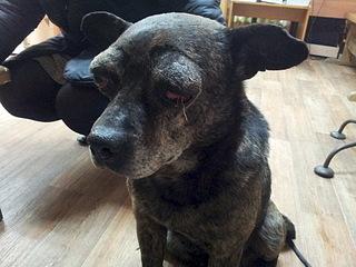 1920 X 1440 628.9 Kb Боря, 17 лет - сбитая собака, Авангардная, скорее всего не будет видеть