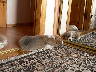 1920 X 1440 322.6 Kb Веточка для Коржиков. У нас родились абиссинские котята и щенки пемброка
