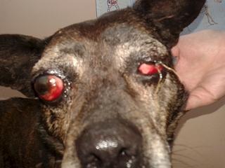 1920 X 1440 894.5 Kb Боря, 17 лет - сбитая собака, Авангардная, скорее всего не будет видеть